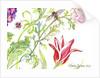 Ranuncula and Tulip by Kimberly McSparran