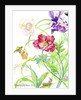 Botanical print -card collection by Kimberly McSparran