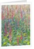 Foxgloves by Leigh Glover