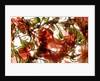 Hibiscus Coleus Array by Julia McLemore