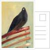 Kingly Court Pigeon by Nancy Moniz Charalambous