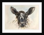 Hello Ewe by Alison Cooper