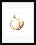 Onion Study by Alison Cooper