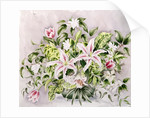 Still life with Lilies by Alison Cooper