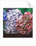 Hydrangeas by Helen White