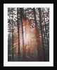 Sunburst by Helen White