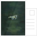 Moth Wing by Bella Larsson