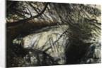 Undergrowth by Calum McClure