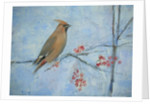 Waxwing (detail) by Ruth Addinall
