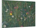 Plants of the Machair by Ruth Addinall