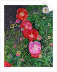 Poppies by Ruth Addinall