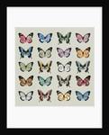 Papillon by Sarah Hough