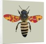 Honey Bee by Sarah Hough