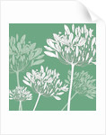 Agapanthus breeze by Sarah Hough