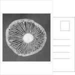 Fungi by Jim Occi