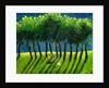 Zebra Trees by Gigi Sudbury