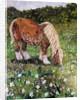 Hillside Horse by Kirstie Adamson