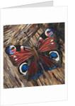 Peacock Butterfly by Kirstie Adamson