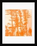 if the trees were orange,2019 by Alex Caminker