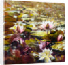Lilies in Melbourne gardens by Mary Smith