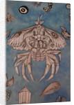 Moth Crab, 2018 by Hazel Florez