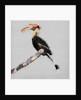 Birdy Birdy, 2019 by Sylver Bernat