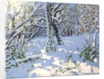 Christmas sledging in Allestree Woods by Andrew Macara