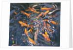 Goldfish by Andrew Macara