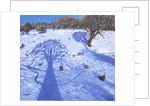 Chatsworth, winter tree shadows by Andrew Macara