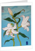 White lily on a blue background, 2010, oil on wood by Joel Joel