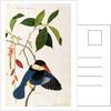 Kingfisher or Alced, Poko Booah Pootal, Boorong radja oodang by Chinese School