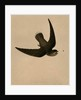 Chimney Swallow, 1841 by Isaac Sprague