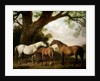 Two Shafto Mares and a Foal by George Stubbs