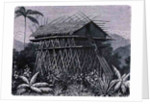 House in the Arfak village of Memiwa, New Guinea by French School