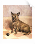 Waiting to Play, a Cairn terrier with a ball by Frank Paton