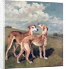 Greyhounds by John Emms