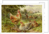 Cochin China Fowls by George Hickin
