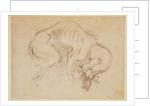 Study of a dog by Michelangelo Buonarroti