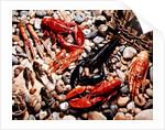 Collection of Shellfish by Unknown