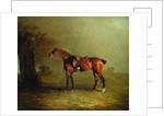 Racehorse by Benjamin Marshall