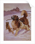 Three dogs playing in the snow by John Charlton