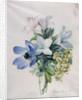 Anemone, wisteria and laburnum by Marie-Anne