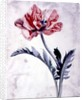 Flower Pieces, Oriental Poppy by Marie-Anne
