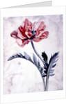 Flower Pieces, Oriental Poppy by Marie-Anne