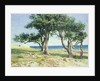 Old Olive Trees, Bordighera by Edwin Bale
