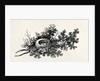 Bird's Nest by Thomas Bewick