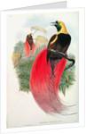 Bird of Paradise by John & Hart