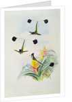 Hummingbird, engraved by Walter and Cohn by John & Richter