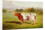 Portrait of a Shorthorn by William Joseph Shayer