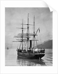 The Terra Nova sailed by Scott, in Antarctic waters by English Photographer